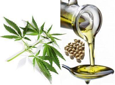 hemp-seed-oil-2