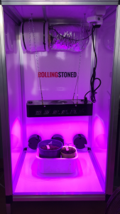 De eenvoudige kweekkit met LED-lamp van Rollingstoned.nl