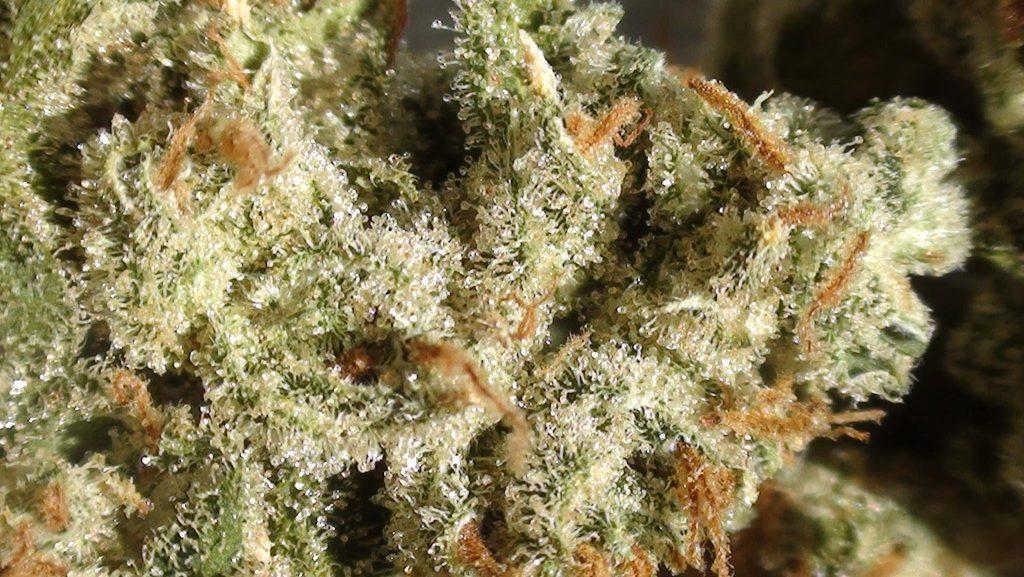 Amnesia Haze, binnenkort als officiële medicinale cannabis te krijgen dankzij de input van patiënten