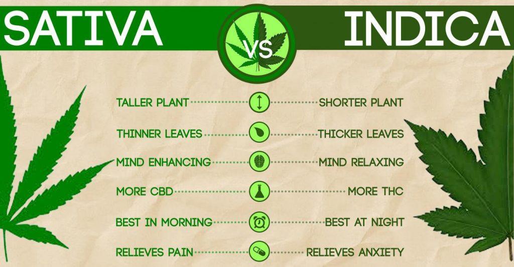 Sativa's en indica's verschillen in groei-eigenschappen maar ook in effect van elkaar.