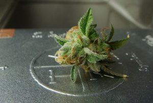 Waar wiet al niet goed voor is... Steeds meer ziekten en aandoeningen hebben baat bij een behandeling met cannabis als medicijn