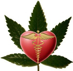 Medicinale cannabis - ofwel mediwiet zoals wij ook wel zeggen - is niet meer weg te denken inmiddels, het werkt namelijk bij tientallen aandoeningen