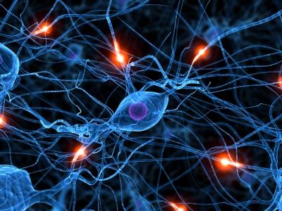 Neurogenese is het ontstaan van nieuwe hersencellen. Cannabis zou dit proces aanzienlijk verhogen.