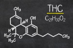 THC kan gevoelens van plezier en eetlust terug opwekken bij anorexiapatiënten. Foto: Zerbor, Shutterstock.com