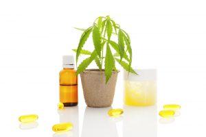 Er kan op vele manieren een CBD-product gemaakt worden van de hennep- of cannabisplant [foto: Eskymaks/Shutterstock]