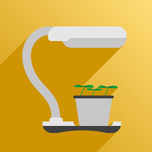 Binnen bootst een kweeklamp de zon na. Je kunt kiezen uit HPS lampen, fluorescente lampen of LED kweeklampen. Beeld: VasutinSergey, Shutterstock.com