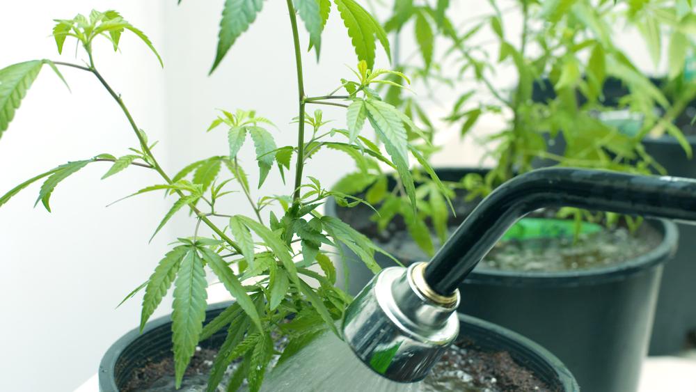 Doe het rustig aan met water en meststoffen. Foto: SEASTOCK, Shutterstock.com