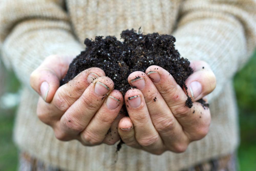 Compost en organische meststoffen zoals bloed- en beendermeel zijn prima voor medicinale wietplanten. Foto: Cora Mueller, Shutterstock