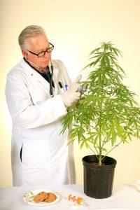 Voordat er klinische studies op patiënten worden uitgevoerd wordt onderzoek gedaan naar de meest veelbelovende componenten van de wietplant. [Foto: shutterstock/mikeledray]