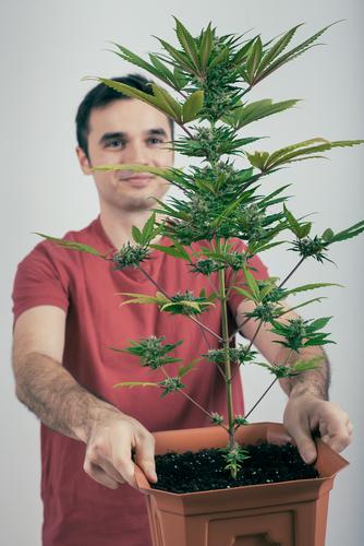 Medicinale wiet kweken is niet moeilijker dan een kamerplant in leven houden. Foto: Jan Mika, Shutterstock