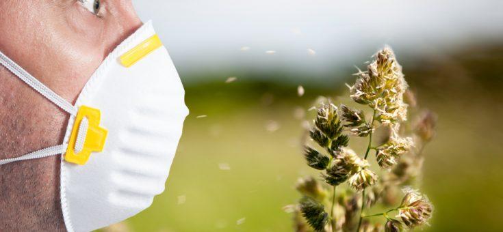 Kun Je Allergisch Zijn Voor Wiet Mediwietsite