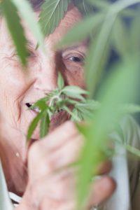Steeds meer patiënten kweken hun eigen medicinale cannabis. [Foto: shutterstock/Jan Mika]