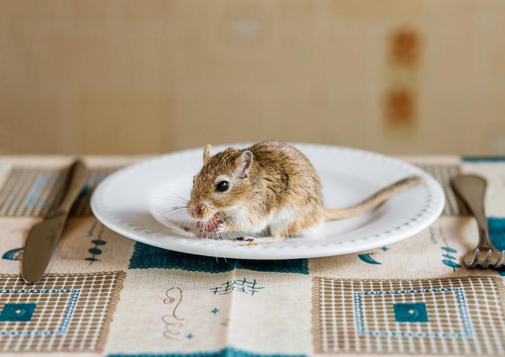 De muizen die THC toegediend kregen aten beduidend meer dan de controlegroep. [Foto: shutterstock/Sergey Zaykov]