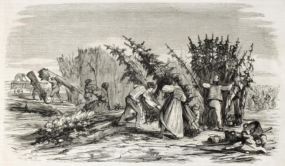 Er is een tijd geweest waar men verplicht werd hennep te verbouwen vanwege de brede inzetbaarheid van de bijzondere plant. [Foto: shutterstock/Marzolino]