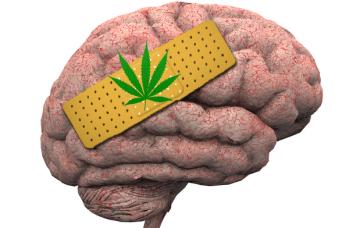 Cannabinoïden kunnen mogelijk een grote rol spelen bij het tegengaan van hersenbeschadiging door ontwenningsverschijnselen van alcohol. [Foto: shutterstock/Bruce Rolff]