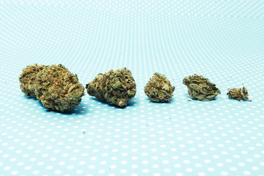 Kleine beetjes cannabis zijn goed voor je gezondheid, maar ook voor je portemonnee. [Foto: shutterstock/doug-shutter]