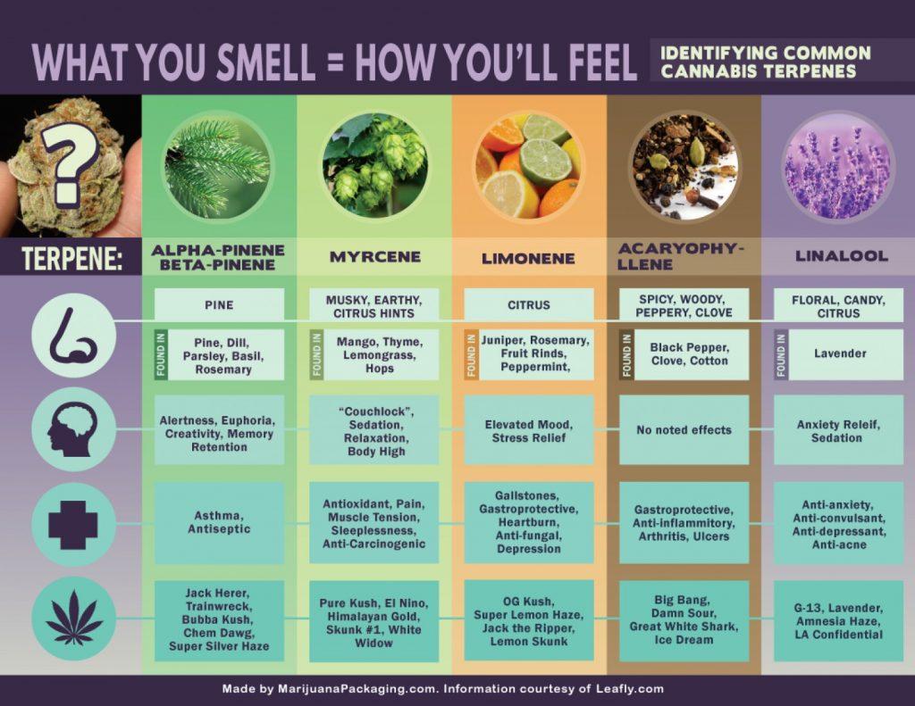 In dit schema zie je een aantal veel voorkomende cannabissoorten en hun eigenschappen.