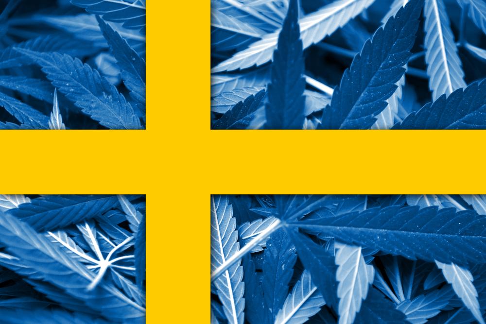 Zweedse artsen regelen toestemming medicinale cannabis - Mediwietsite