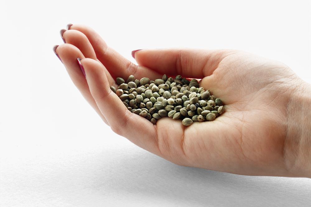Meer zaadcellen met CBD - Cannabis tegen onvruchtbaarheid - Mediwietsite