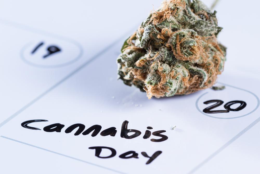 Cannabis-festival, opening A'dam en nieuwe locaties Suver Nuver - Mediwietsite