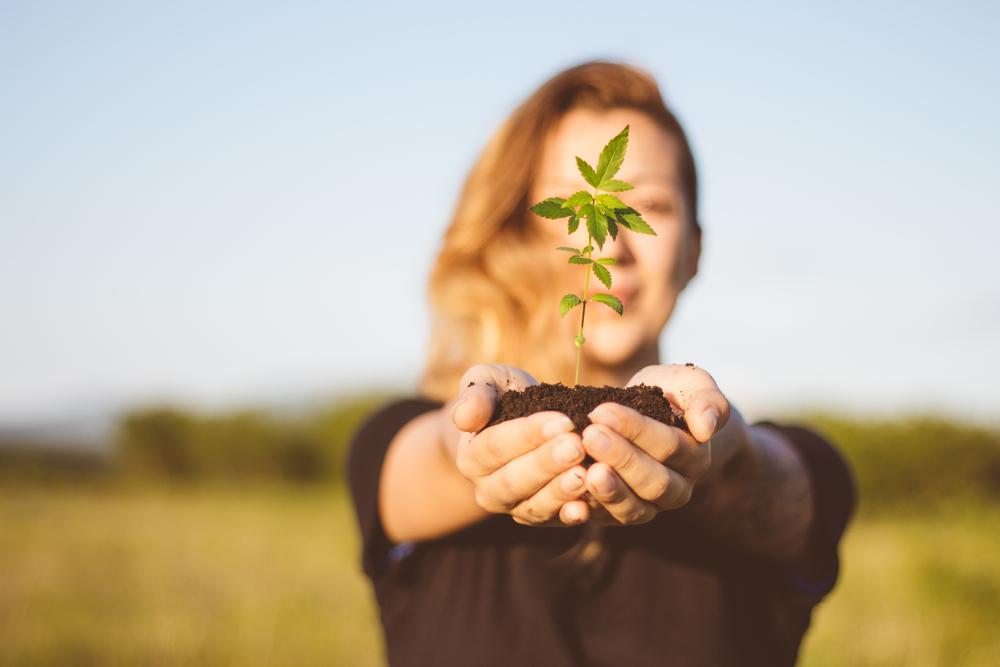 Wietwet - De gevolgen voor medicinale cannabis-gebruikers - Mediwietsite