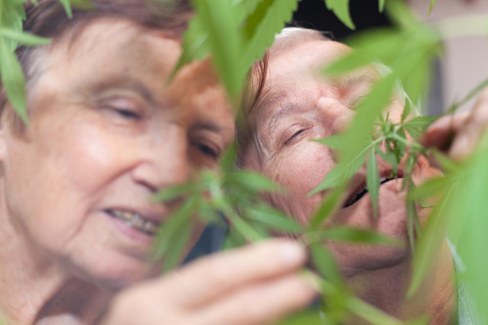 10x waarom senioren cannabis zouden moeten gebruiken - Mediwietsite