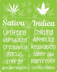 sativa vs indica effect