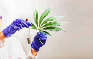 cannabis, onderzoek, wetenschappelijk onderzoek, wiet, CBD, cannabidiol, THC
