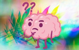 cannabis hersenen